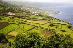 Het Eiland van de Azoren stock foto's