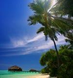 Het eiland van de Maldiven Stock Foto's