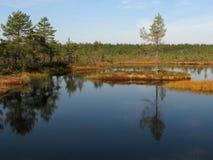 Het eiland van het moeras stock foto's