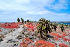 Het eiland van het zuidenplein Stock Fotografie