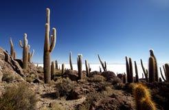 Het Eiland van Incahuasi Stock Fotografie