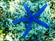 Het Eiland van Indonesië Bali Menjangan Onderwater royalty-vrije stock afbeelding
