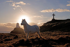 Het Eiland van Llandwyn stock foto's
