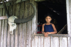 Het eiland van Marajo. Brazilië Royalty-vrije Stock Foto's