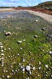 Het eiland van Rottnest in Australië Royalty-vrije Stock Fotografie