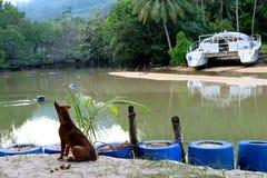 Het eiland van Tioman Stock Afbeeldingen