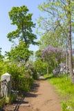 Het eiland van Valaam Steeg in het park stock foto
