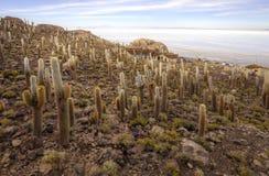 Het Eiland van vissen, Salar DE Uyuni, Bolivië Royalty-vrije Stock Fotografie