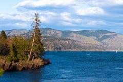 Het eilandleven die van altijdgroene bomen op rotsen groeien Royalty-vrije Stock Afbeeldingen