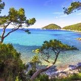 Het eilandoverzees van Elba, het strandkust van Portoferraio Viticcio en bomen Stock Foto