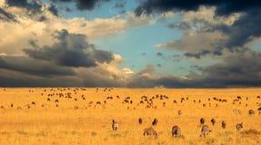 Migratie op Serengeti Stock Foto