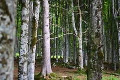 het eind van de zomer in de bossen stock fotografie