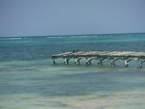 Het eindamber Caye Belize van het doknoorden Stock Foto