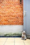 Het einde van de honddeur royalty-vrije stock afbeeldingen