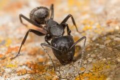 Het einde van de mierenkuil Stock Afbeeldingen