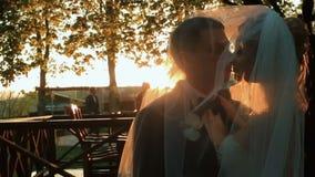 Het elegante gelukkige van de van de huwelijkspaar, bruid en bruidegom kussen in het park op zonsondergang stock footage