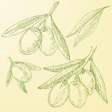 Het elementeninzameling van de olijfschets royalty-vrije illustratie