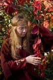 Het elf in het de herfstbos stock foto's