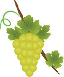 Het embleem van de druif Stock Fotografie