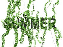 Het embleem van de zomer Stock Foto's