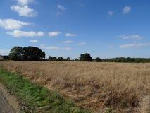Het Engelse gebied van plattelandslandbouwers met gewassen Royalty-vrije Stock Afbeelding