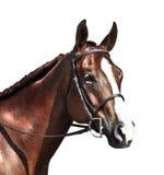 Het Engelse paard haed Royalty-vrije Stock Afbeeldingen