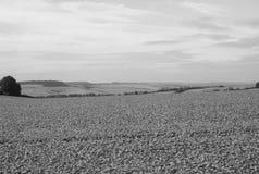 Het Engelse panorama van het land in Salisbury in zwart-wit royalty-vrije stock fotografie