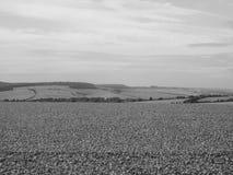 Het Engelse panorama van het land in Salisbury in zwart-wit stock afbeelding