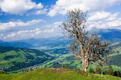 Het enige boom en landschap van Tirol Royalty-vrije Stock Foto