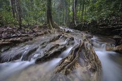 Het equatoriale bos met bomen en struiken Royalty-vrije Stock Fotografie