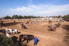 Het Equestrainpaard toont het Springen Royalty-vrije Stock Foto
