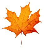 Het esdoorn-blad van de herfst stock fotografie