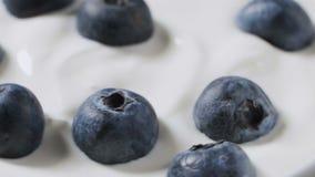 Het eten van bosbessen met room of yoghurt door lepel, fruitachtergrond stock videobeelden