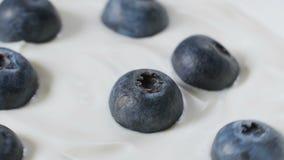 Het eten van bosbessen met room of yoghurt door lepel, fruitachtergrond stock footage