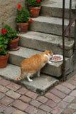 Het eten van de kat royalty-vrije stock afbeelding