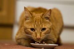 Het eten van gemberkat royalty-vrije stock afbeeldingen