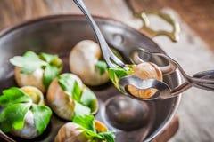 Het eten van geroosterde slakken Stock Afbeeldingen