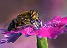 Het eten van het insect stock afbeelding