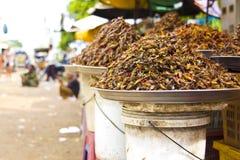 Het eten van het insect van Azië royalty-vrije stock afbeeldingen