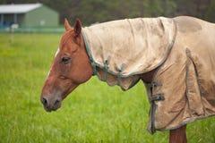 Het eten van het paard Stock Foto