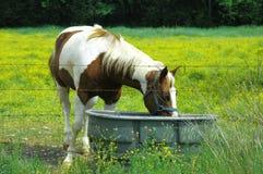 Het Eten van het Paard van de lente Royalty-vrije Stock Afbeeldingen