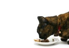 Het eten van kat Stock Afbeeldingen