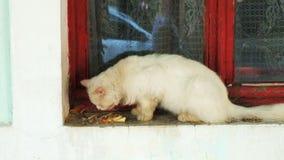 Het eten van kat op vensterbank Vuile wilde kater die zijaanzicht eten stock videobeelden