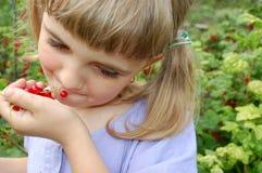 Het eten van rode aalbes Royalty-vrije Stock Foto's