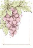 Het etiket van de wijn Stock Afbeeldingen