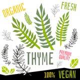 Het etiket verse organische groente van het thymepictogram, van het de kruidenkruid van groentennoten van de de specerijkleur voe stock illustratie
