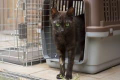 Het Europese kat stellen in haar kennel Stock Afbeeldingen