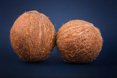 Het exotische hoogtepunt van de fruitkokosnoot van organische voedingsmiddelen Gehele verse en bruine kokosnoten op een donkerbla Royalty-vrije Stock Afbeeldingen
