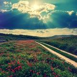 Het fantastische landschap, weg op weide met rode papavers bloeit, donkere hemel over het papaversgebied stock afbeelding