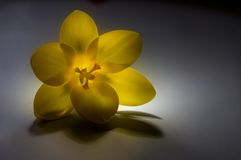 Het fantastische licht Stock Fotografie